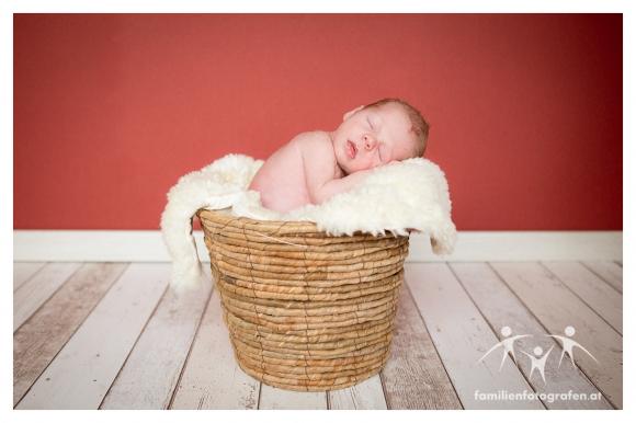 Newborn Fotografie Langenzersdorf-01