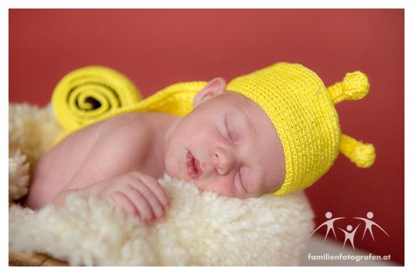 Newborn Fotografie Langenzersdorf-03